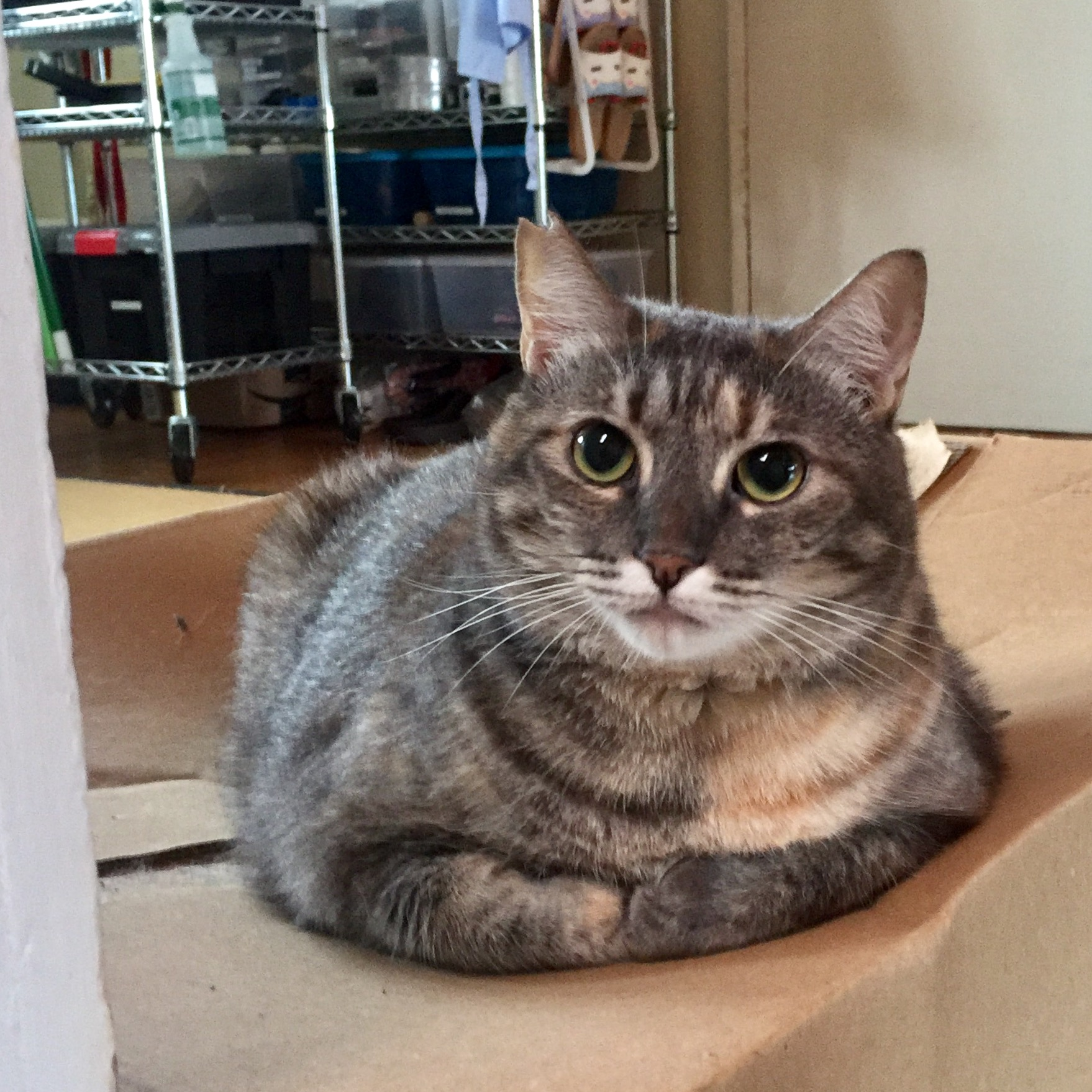Nora sitting on her favorite large box.