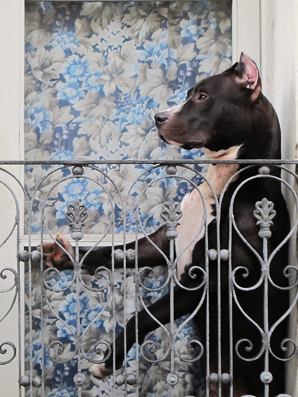 dog waiting , montevideo, uruquai 2014
