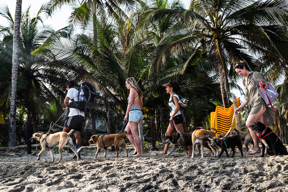 every tourist takes care of one dog for the walk