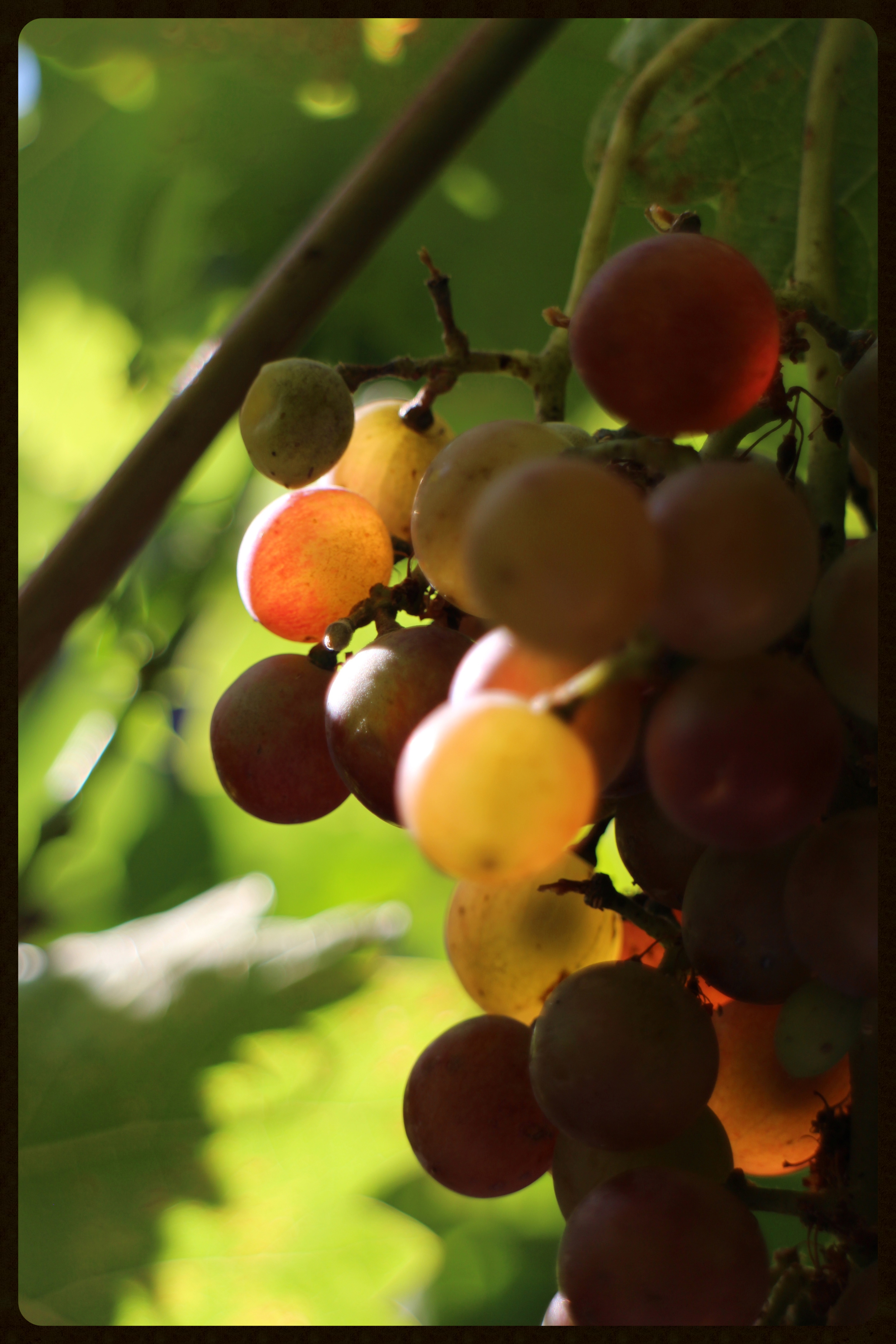 Grape quality and winemaking rely on time.