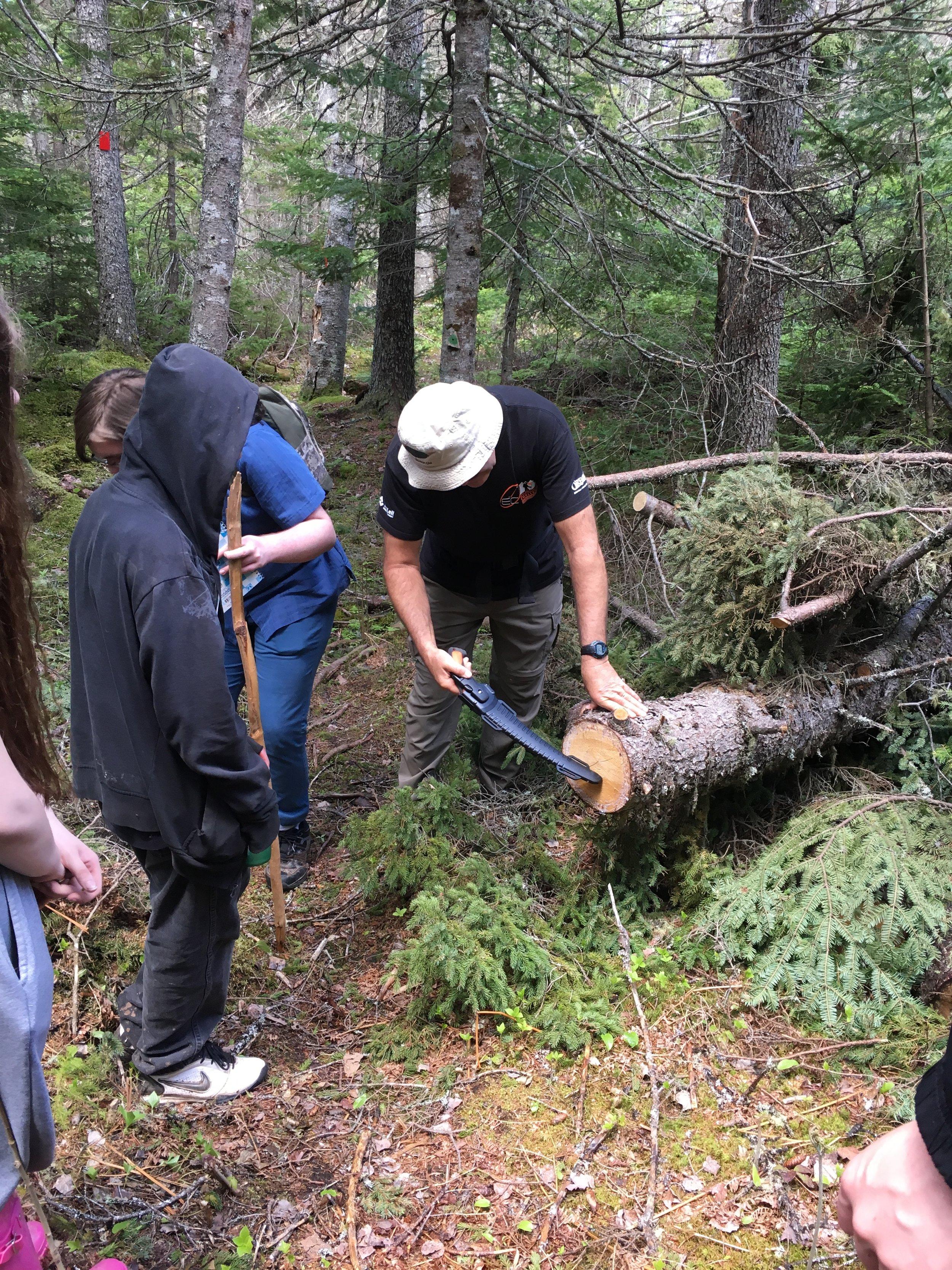 2019 06 - Field Day Aging a tree.jpeg