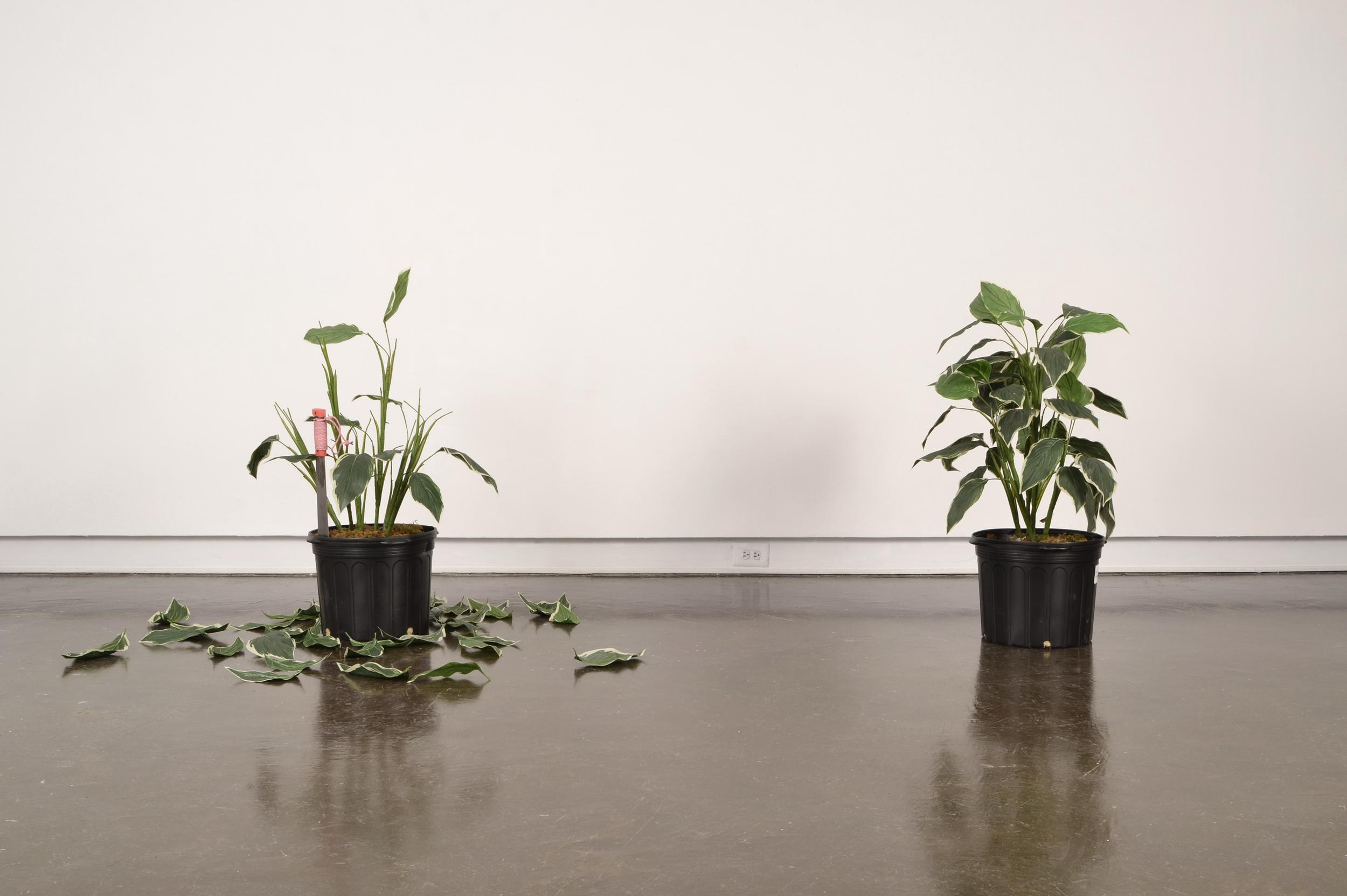 florida fall | 2015 | artificial plants, machete