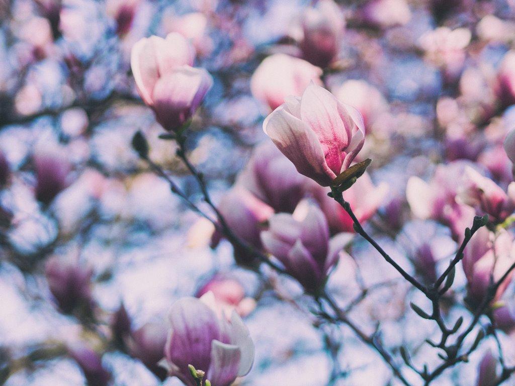 """Magnolia"" can be beautiful..."