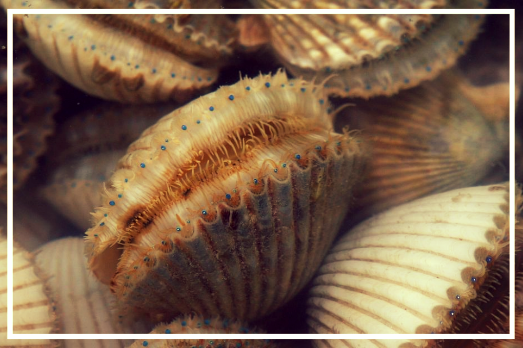 Sumertime Scalloping  June 29th-September 24th   Reserve Your Charter with Lazy Day for the 2019 Scalloping Season