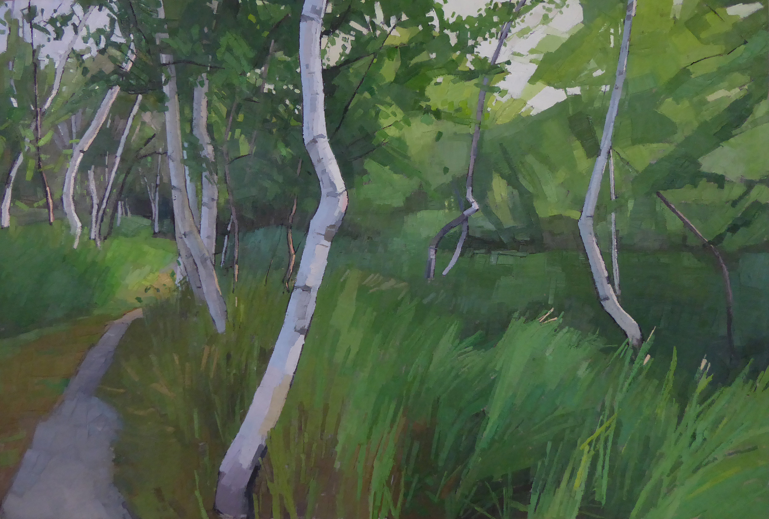 Crooked Birches  24 x 36 oil on linen   Powers Gallery