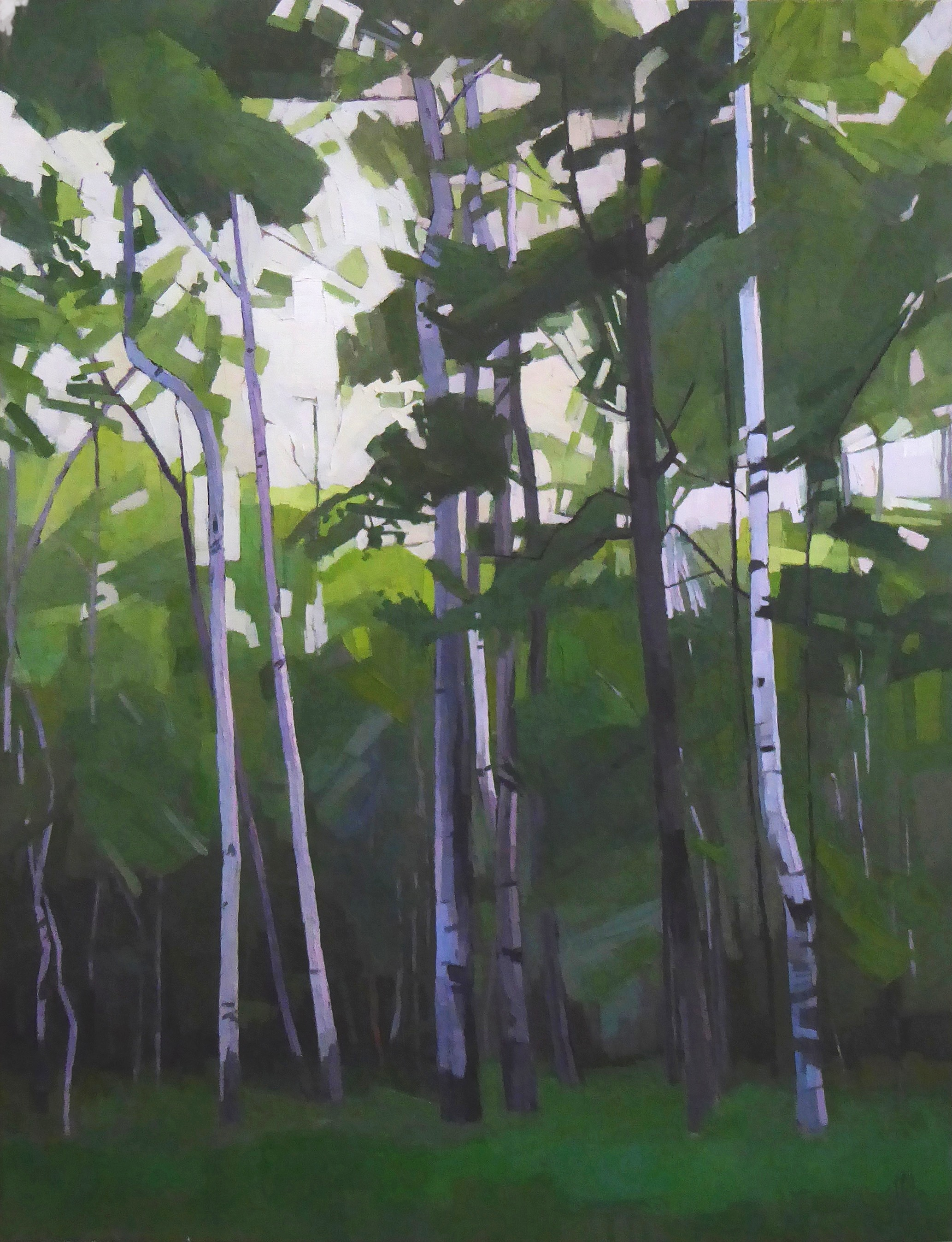 Stand of Birches  30 x 40 oil on linen   Islesford Artists Gallery