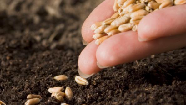 seed_dirt_planting