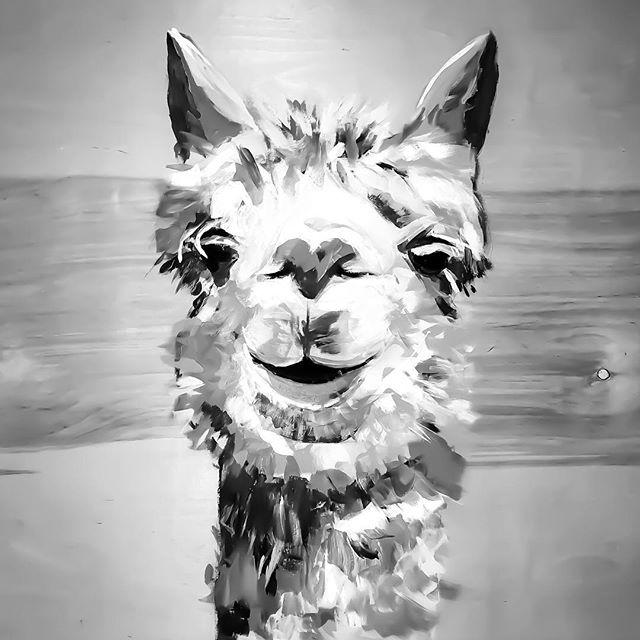 Guess what color this is......🤔☺️ • • •(painted on the side of the road in Albuquerque, NM 2017 🤗😆) • • • #hannahrowanart #vibrant #bigart #alpaca #llama #drseuss #animalart #animalpaintings #abstractcolors #colorfulmind  #abstractportrait #brightcolors #originalart #abstractrealism  #colorfulart #acryliconcanvas #babyontheway #contemporaryart #acrylicpainting #sandiegoartist #llamaart #ratedmodernart #theartshed  #painting #contemporaryartist #pacificbeachart #sdart #nurseryart #contemporarypainter #modernartpainting
