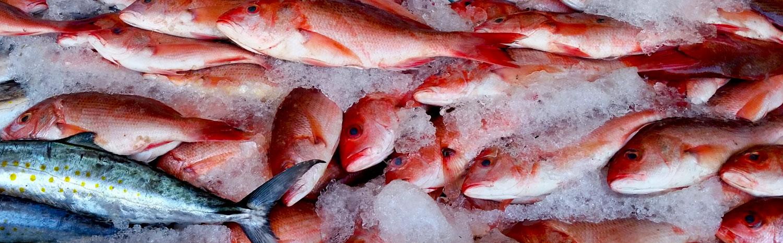 116-fish-on-ice.jpg