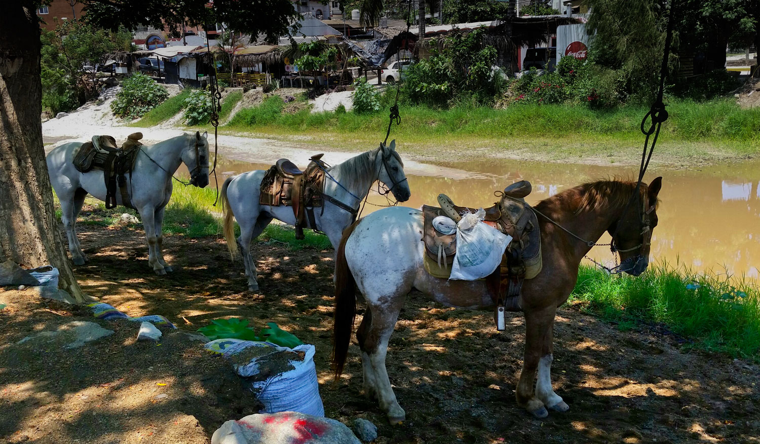 047-horses-with-saddles-by-river.jpg