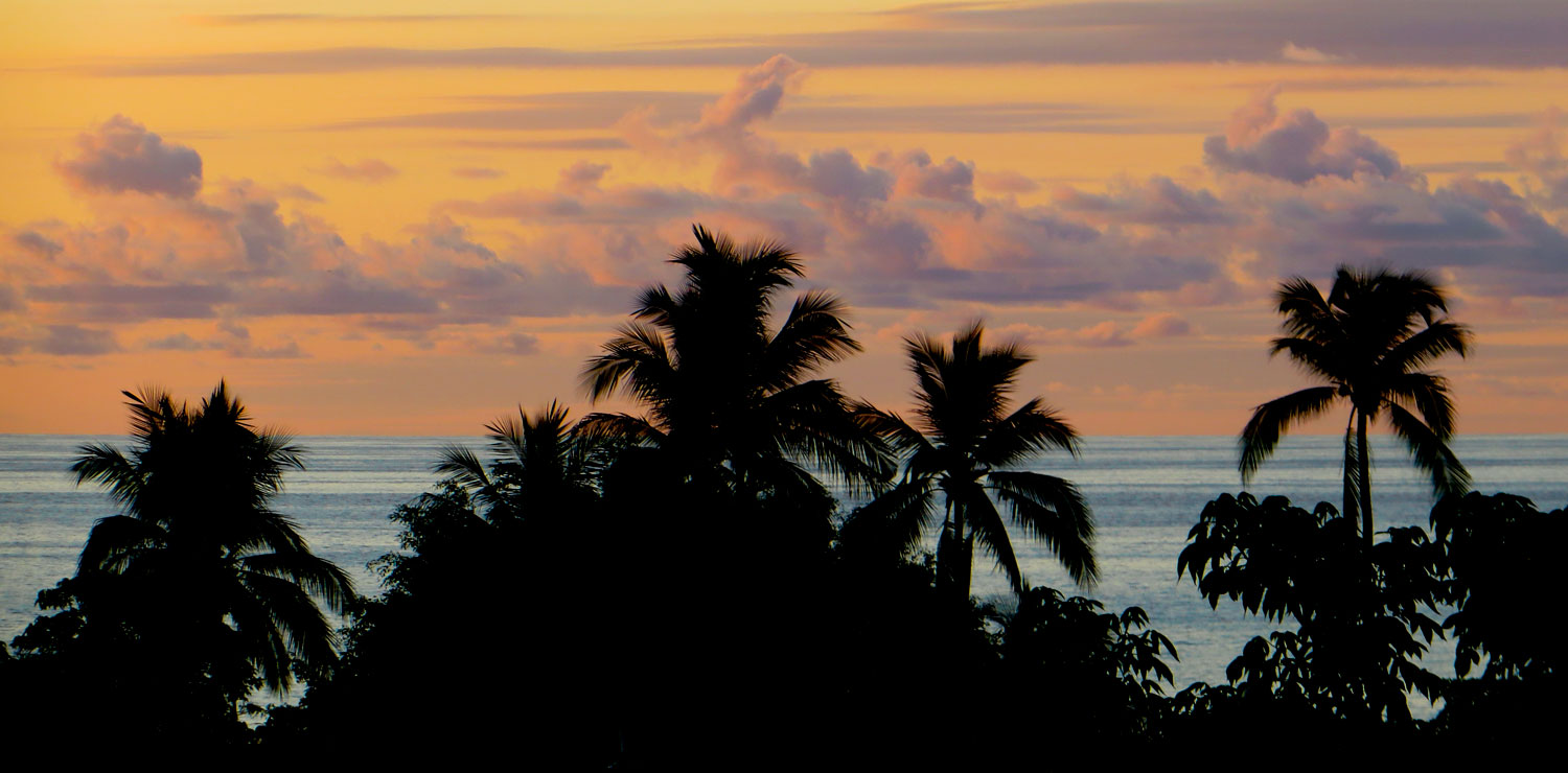 036-palm-trees-silhouettte.jpg