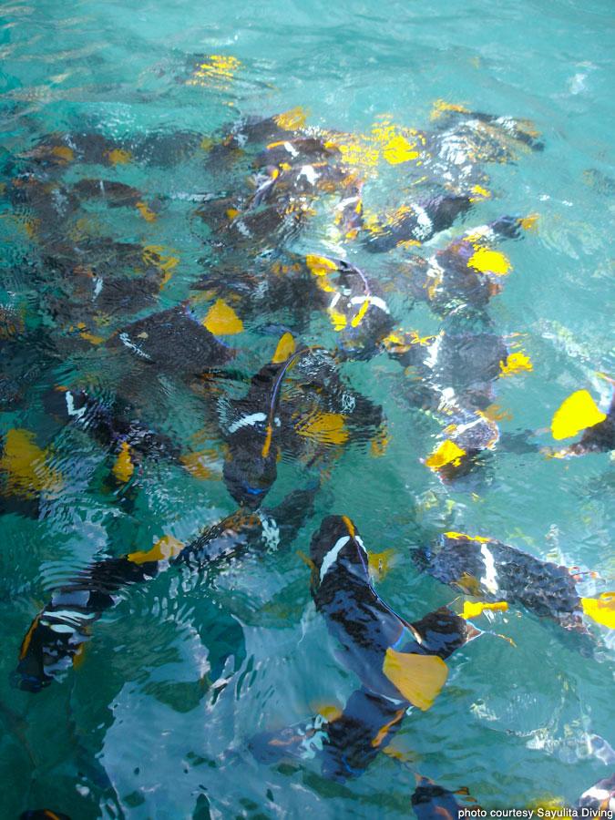Sayulita_Diving_156.jpg