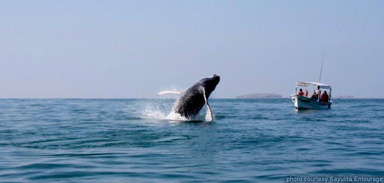 sayulita_entourage-whale_watching-146.jpg