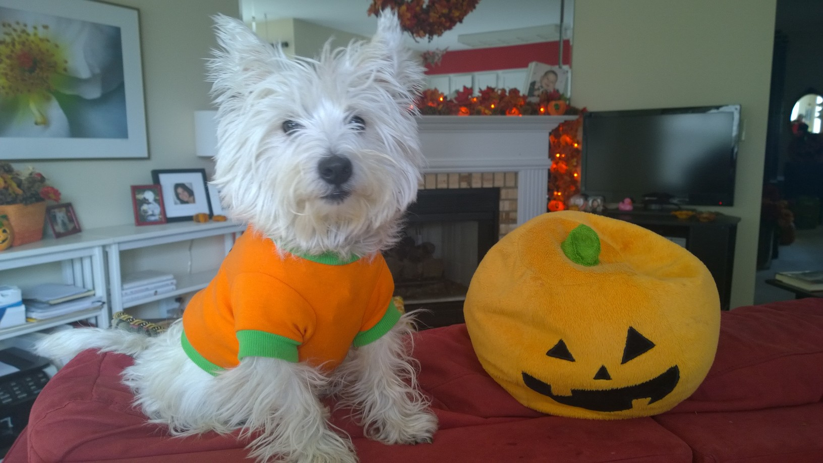 Bella is ready for Halloween!