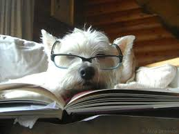 Bella, our do-over.dog loves to read too!