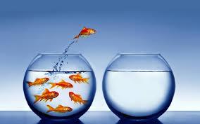 goldfish leaping.jpg