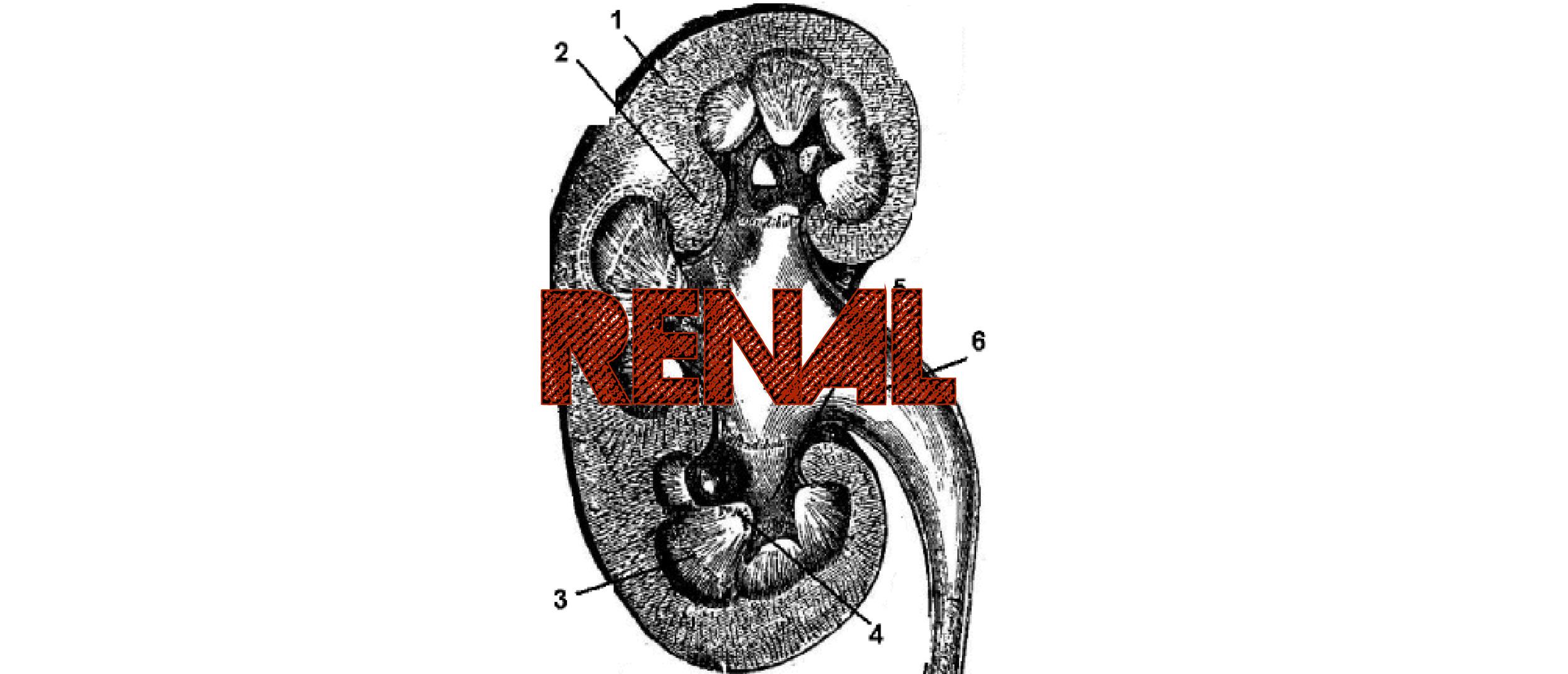 Renal-01.jpg