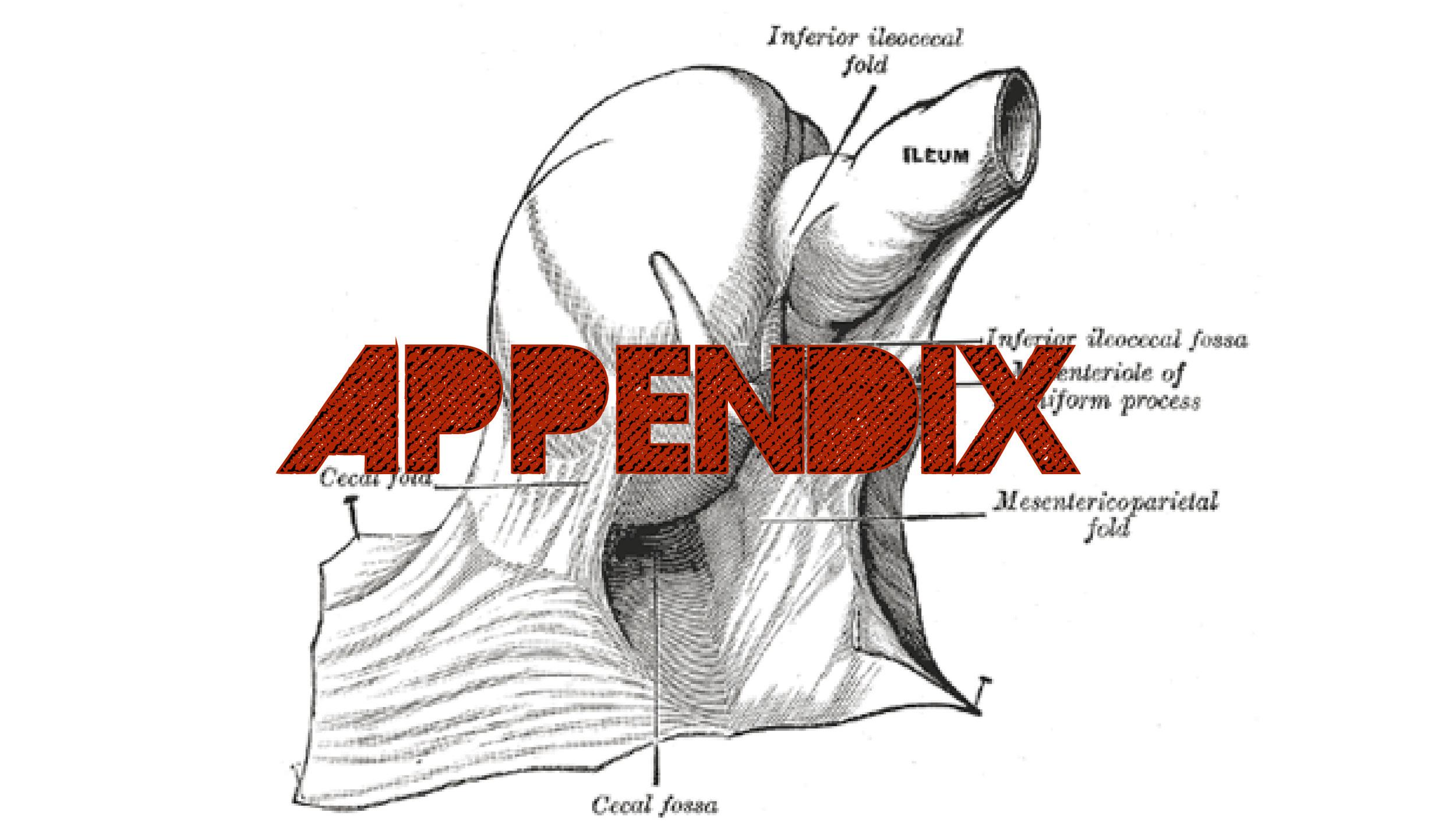 US_Appendix-01.jpg