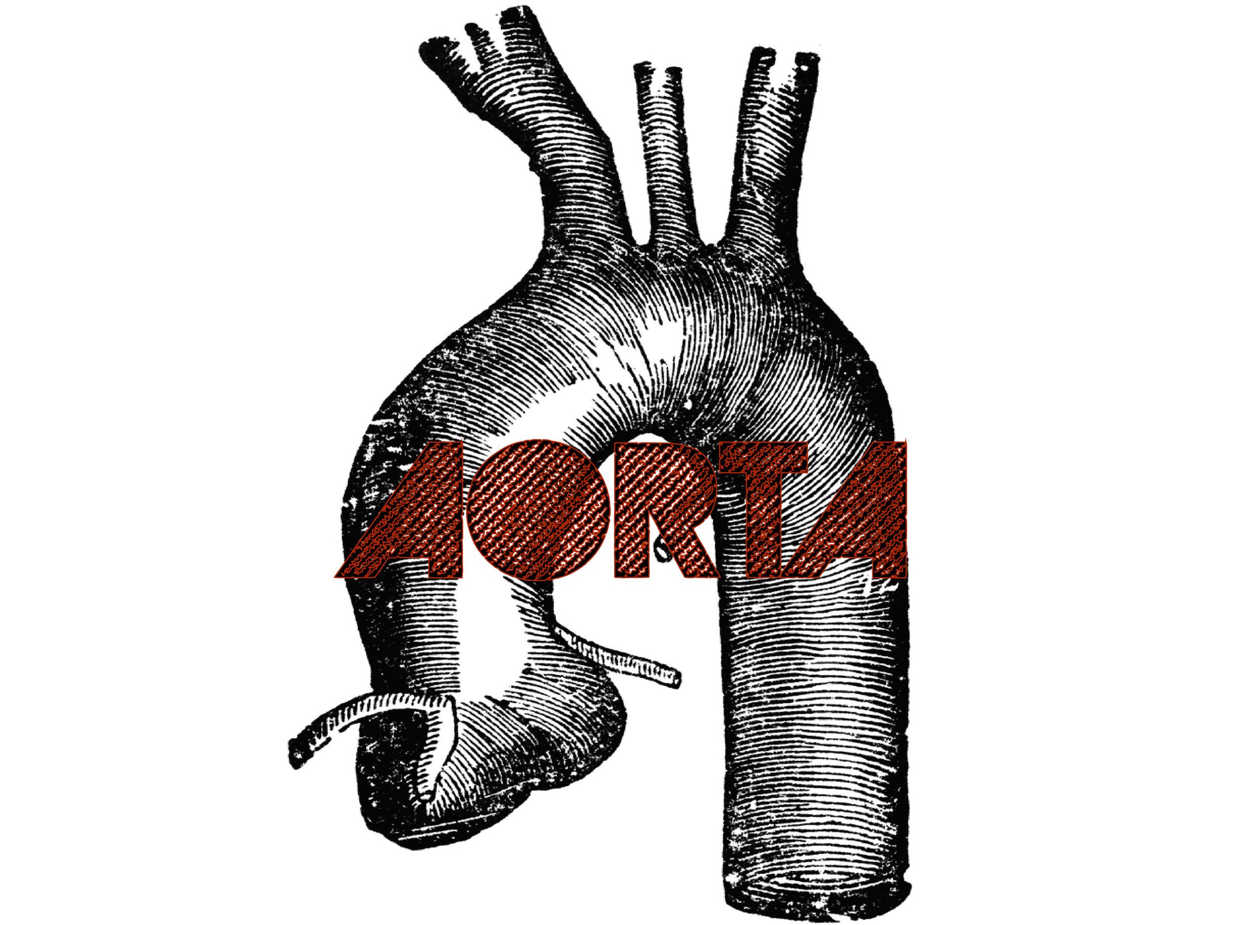 US_Aorta-01.jpg