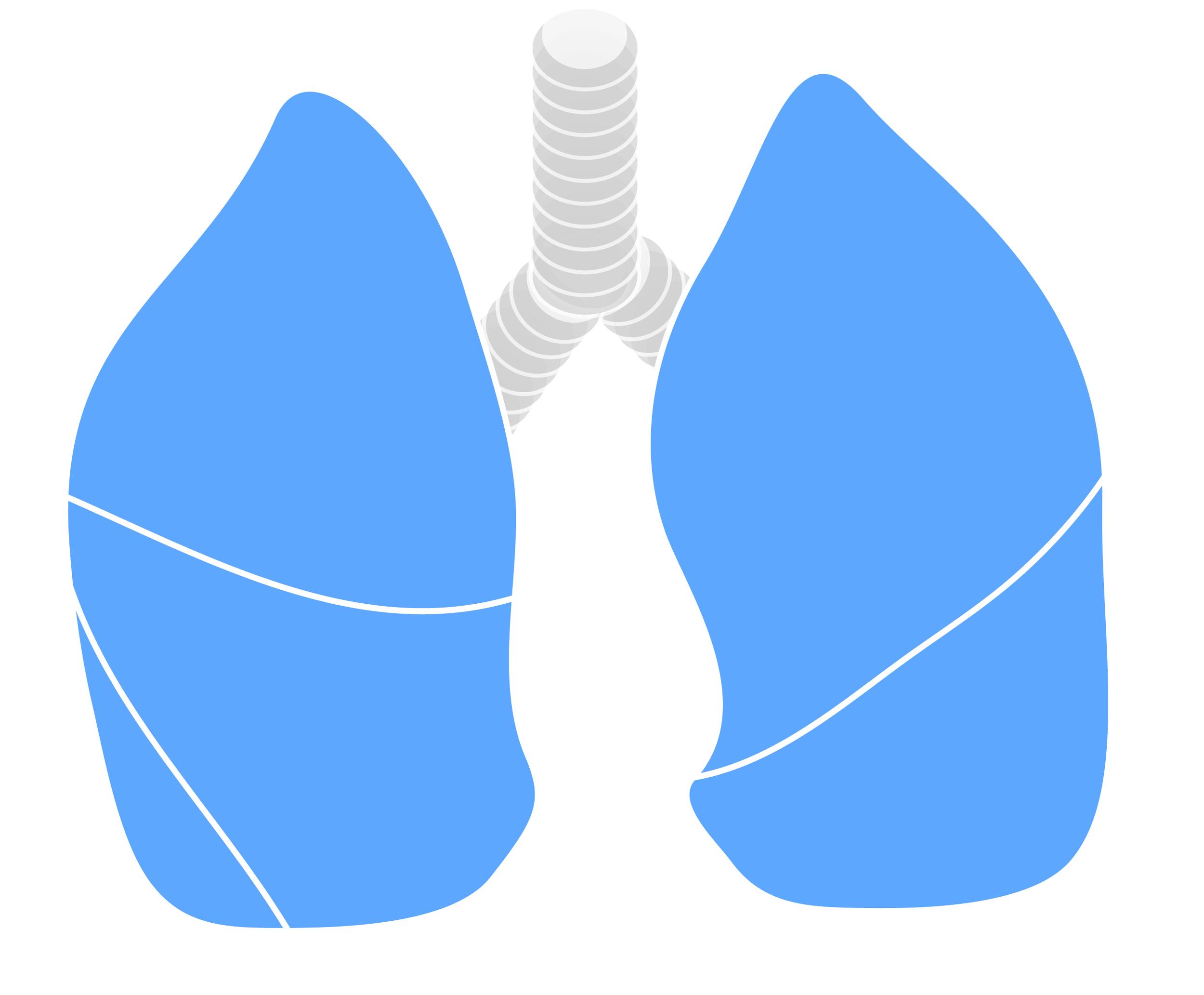 Thoracic&Respiratory-01.png