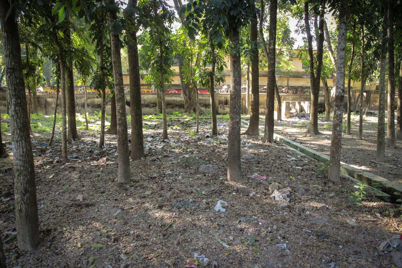 Shaded tree area near ambulance and hospital entrance