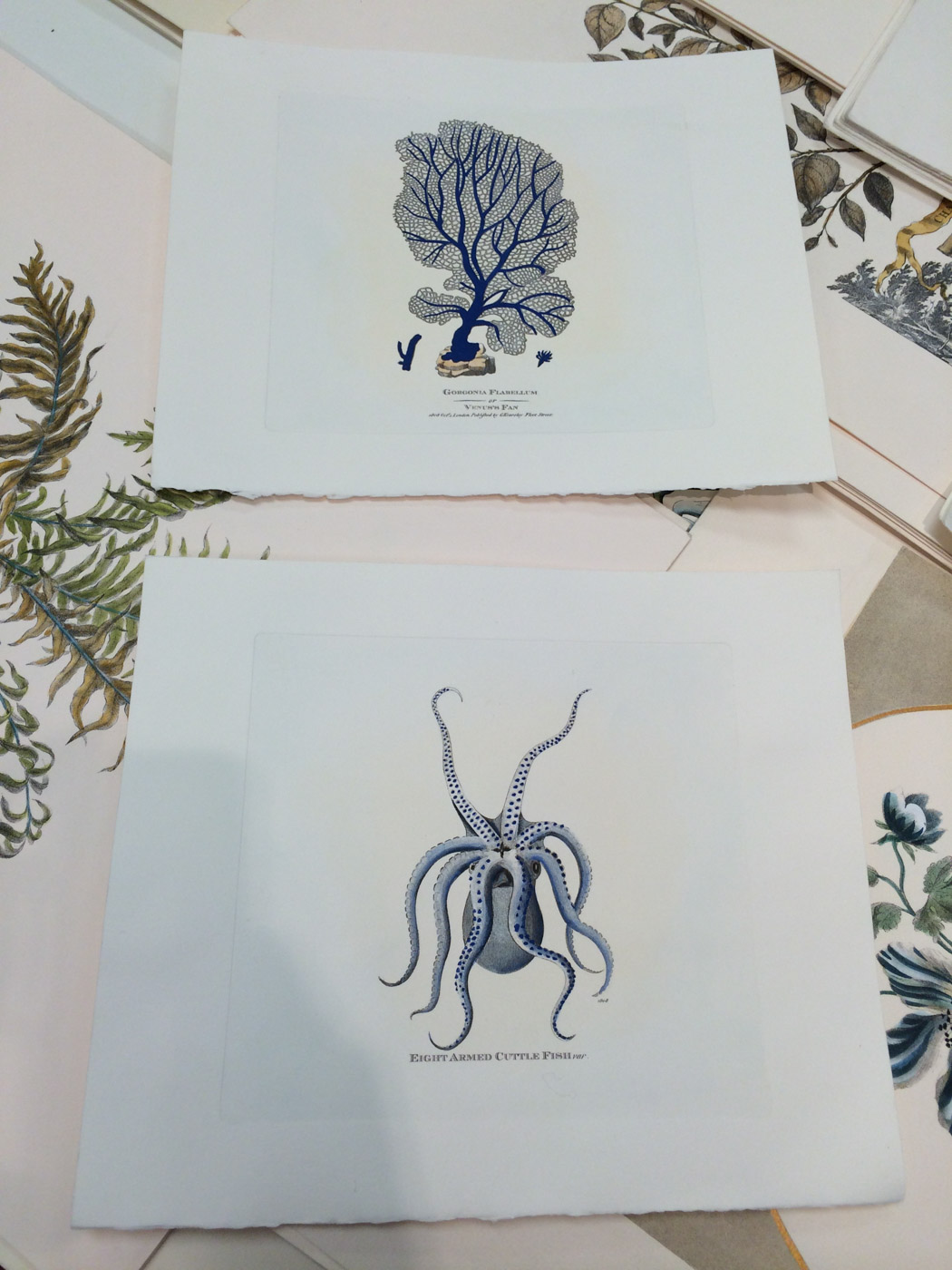 Lo Forti  is a family owned business that makes the most beautiful hand-colored prints on fine paper. Check out the detail on these. The cute little octopus and coral came home with me!