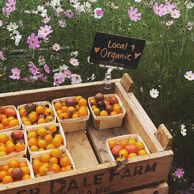 What a lovely Sat! #eatlocal #organicallygrown #freshmarket #summerdontgo