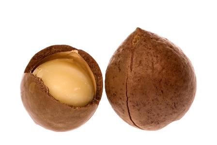 Macadamia Nut.jpg