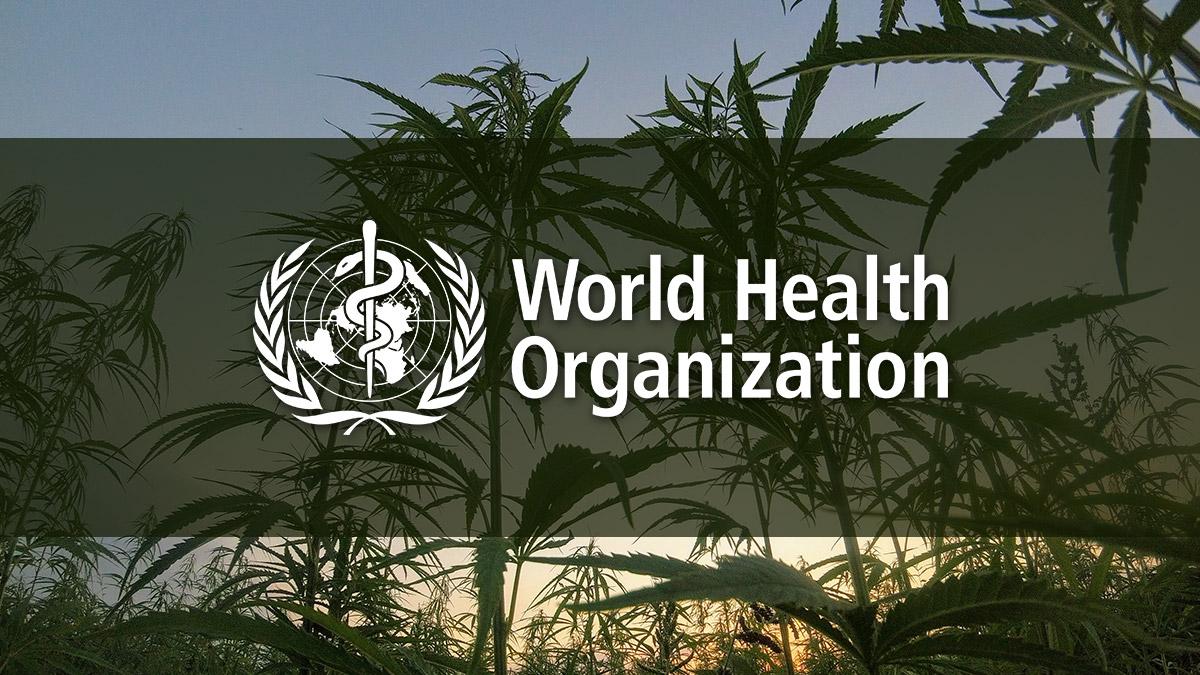 world-health-organization-cannabis.jpg