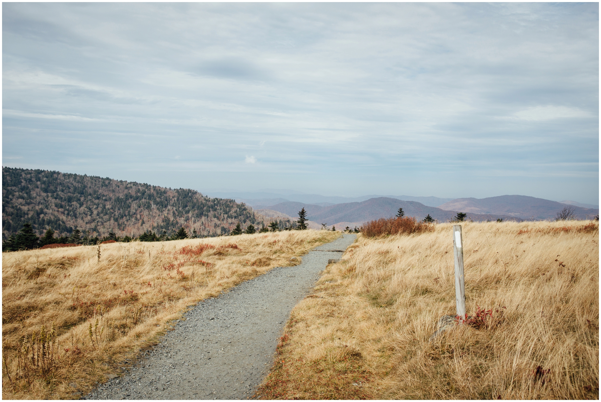 roan-mountain-carvers-gap-appalachian-trail-katy-sergent_0023.jpg