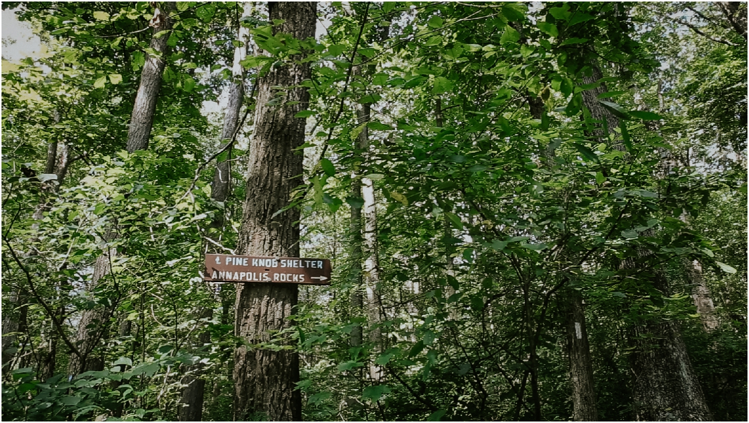 katy-sergent-photography-proposal-appalachian-trail-annapolis-rocks-adventurous-wedding-couples-intimate-elopement-hiking-backpacking-camping-photographer-johnson-city-tn-northeast-tennessee_0008.jpg