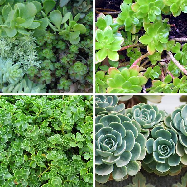 zeff-succulents.jpg