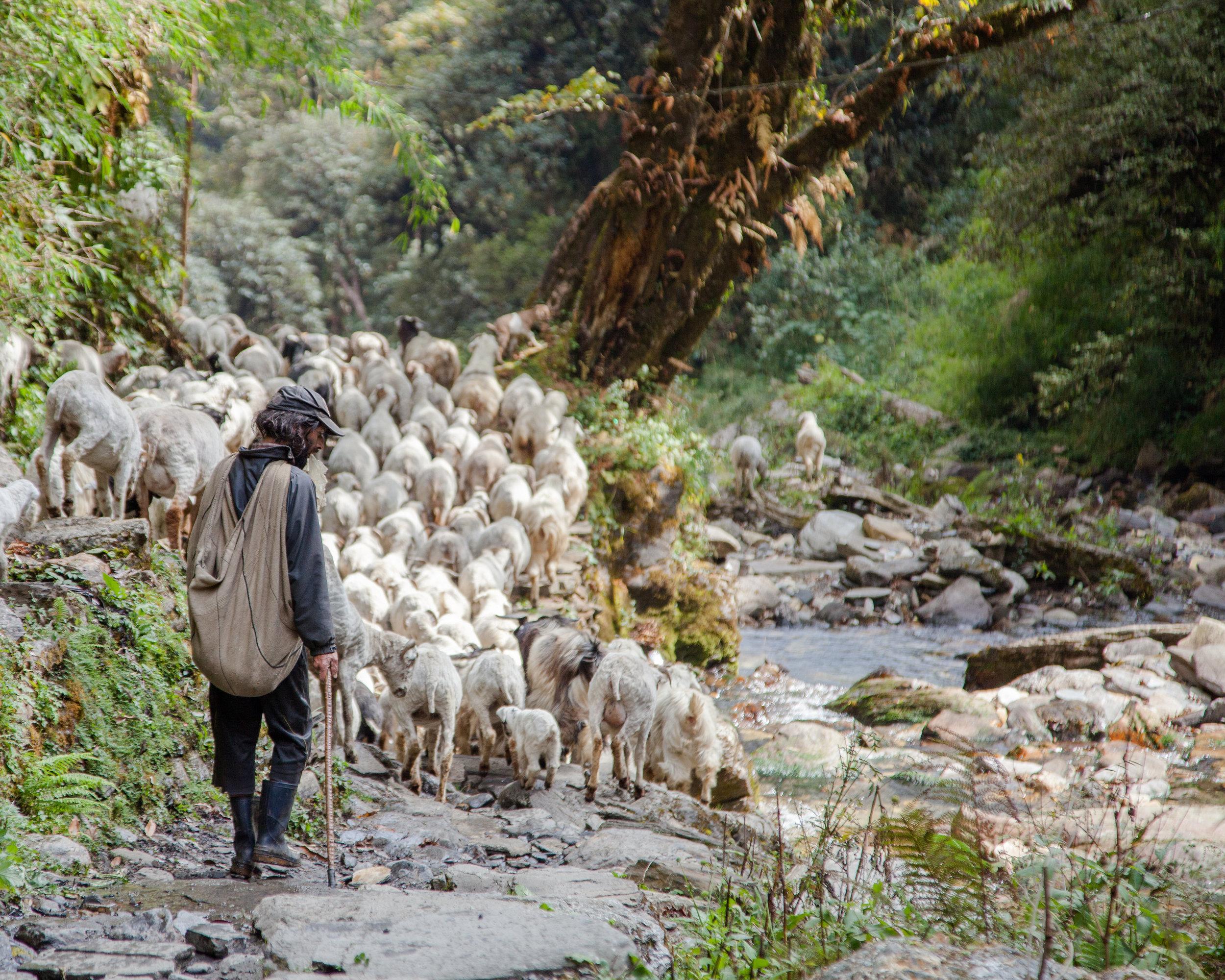 nepal_bil_2017-292.jpg