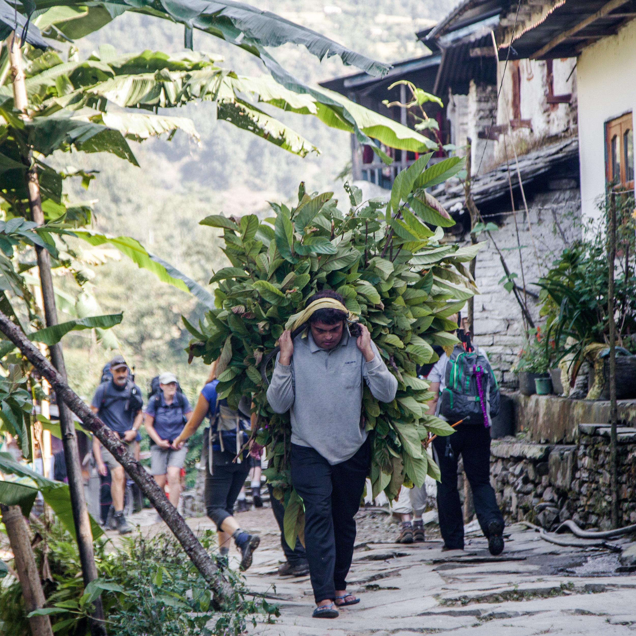 nepal_bil_2017-155.jpg