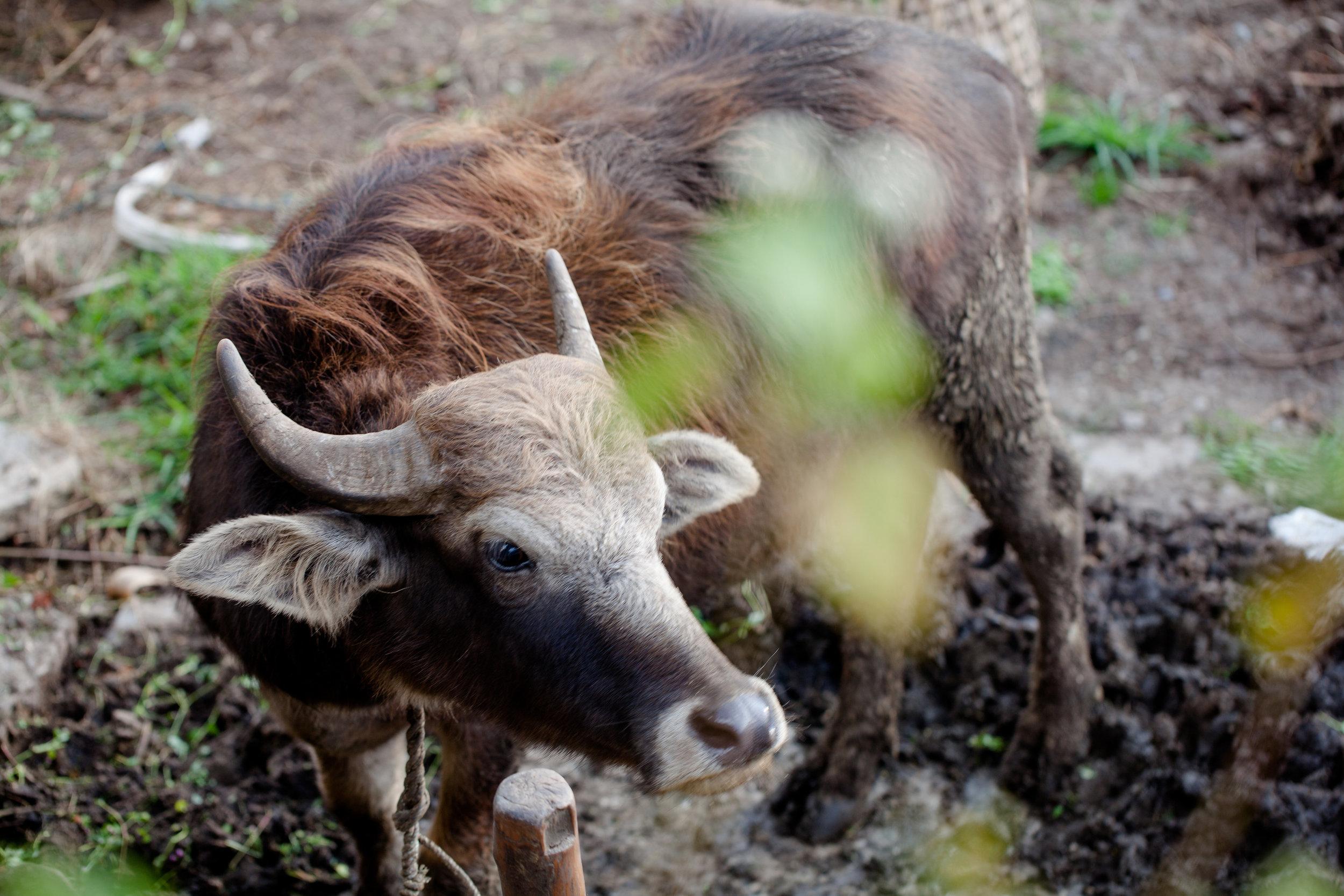 nepal_bil_2017-397.jpg