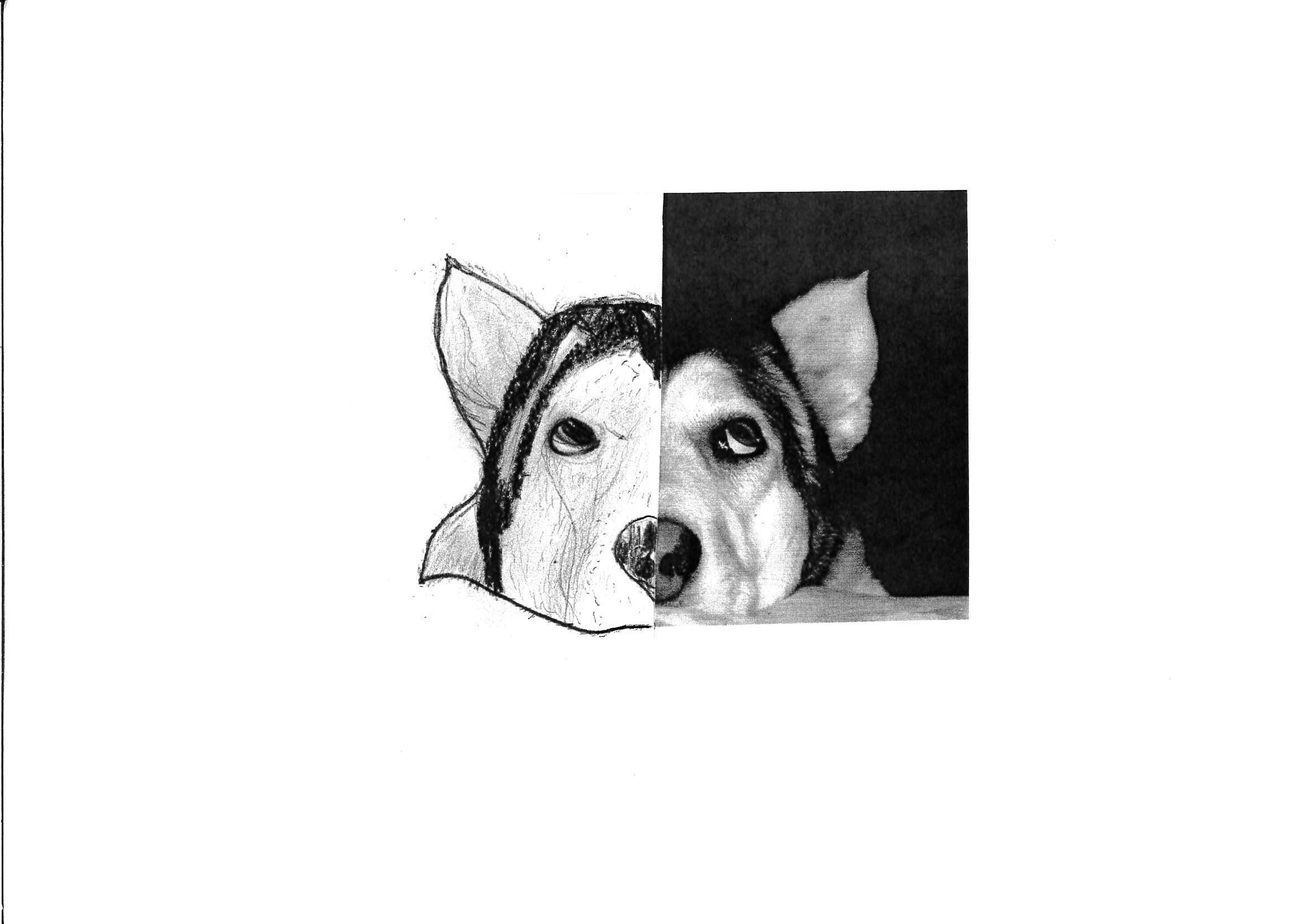 Joshua Cox. Dog. Age 12.jpg