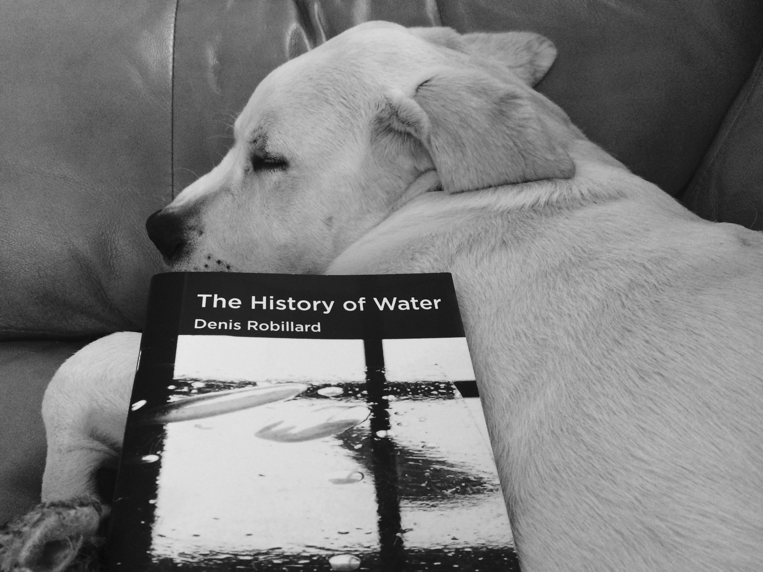 Tom (Cassie's dog)sleeping with a book on him.
