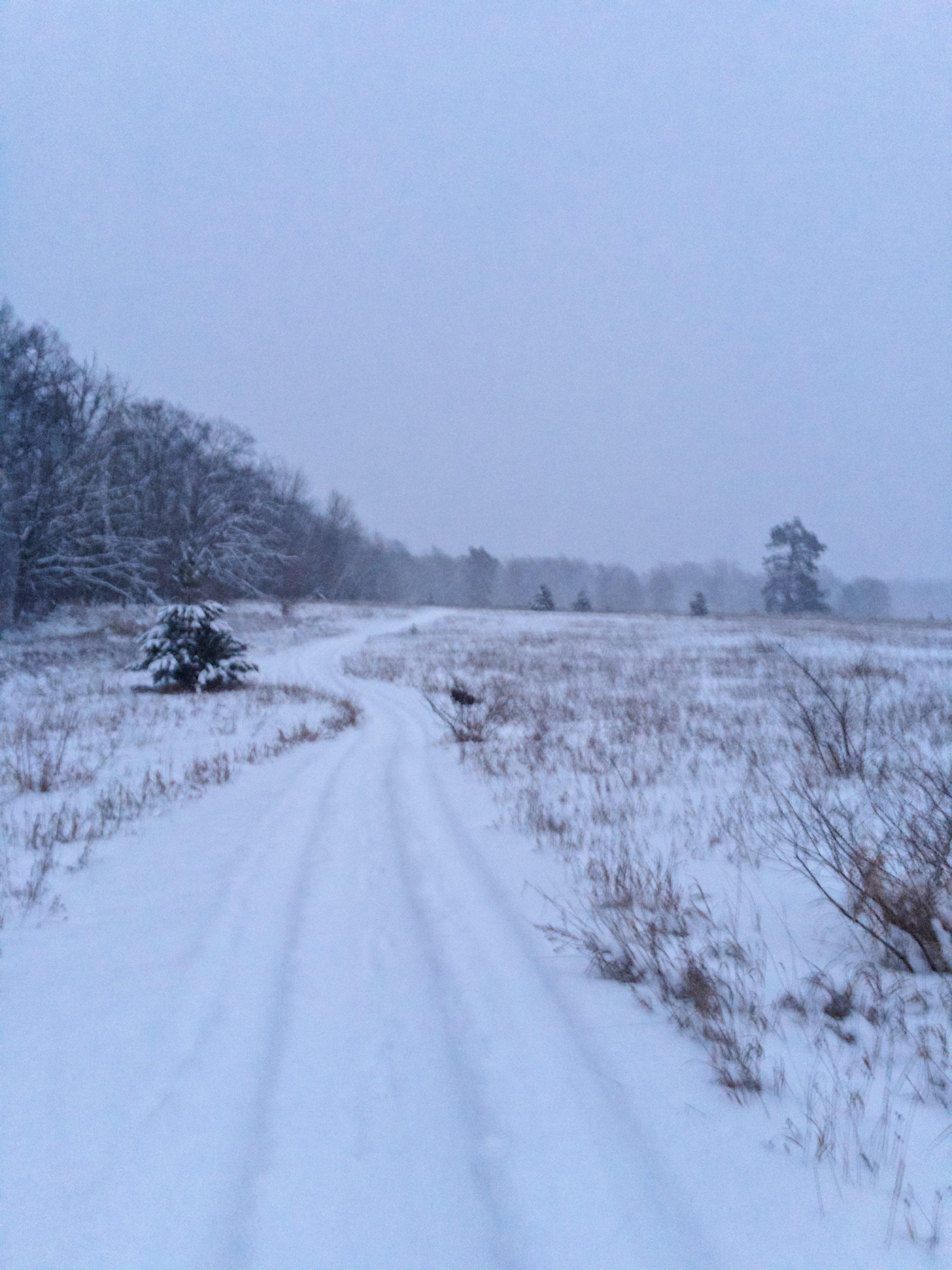 Winter Dormant.JPG