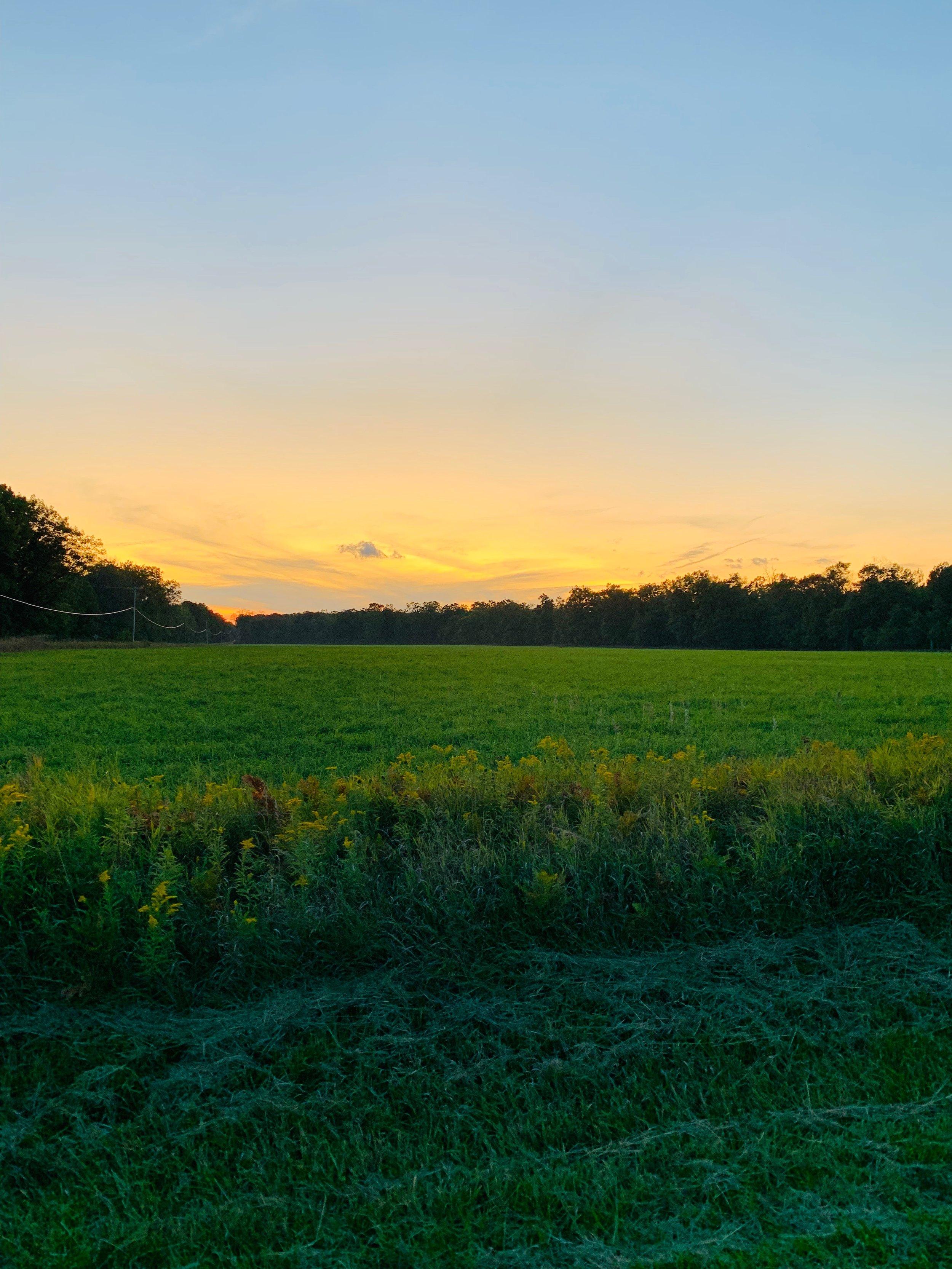 Sunset Field.jpeg