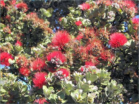 july-tropical-flowers-art-print-fashion-inspiration
