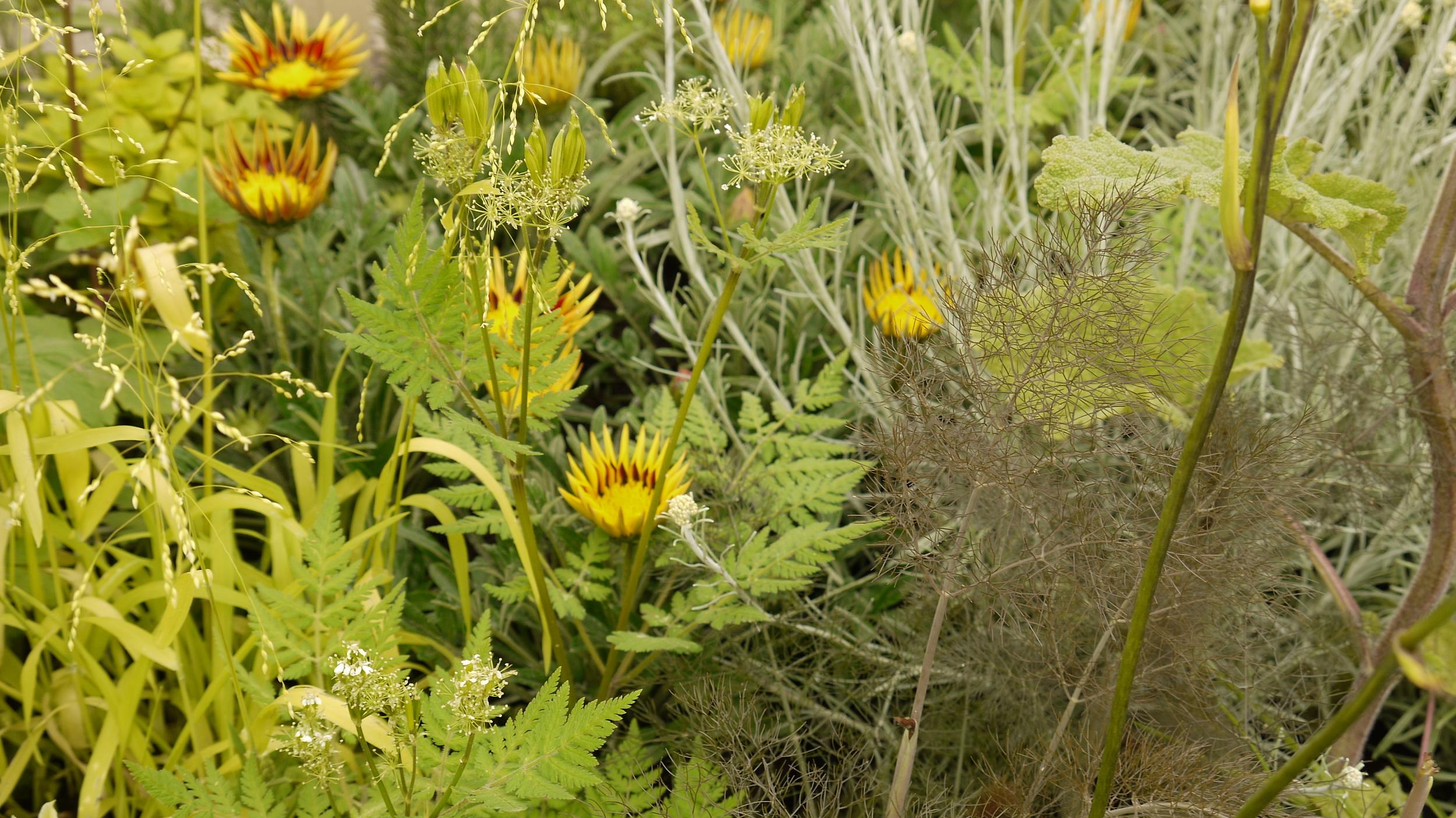 Plants from Mount Venus Nursery, Dublin and Inver Garden Centre, Larne, Co. Antrim.