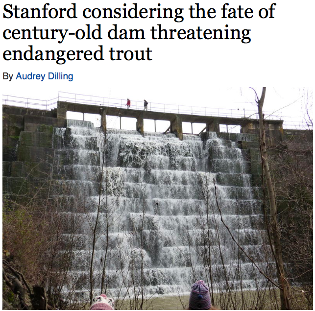 """KALW 91.7 FM Public Radio / January 29, 2015  The Searsville Dam is causing big trouble on the peninsula. The 122-year-old, 65-foot-tall dam is closed to the public, hidden away on 1,200 acres owned by Stanford University.  """"Searsville Dam has been Stanford's well kept, dirty little secret,"""" says attorney Christopher Sproul.[...] """"It's here in California and close to these major metropolitan areas, we have this incredible wildlife. We can see these fish and a steelhead can jump up to fifteen feet in the air. I think to wipe out a fish that can jump over a fifteen foot barrier is unconscionable.""""    Read more & listen to the story at:    http://kalw.org/post/stanford-considering-fate-century-old-dam-threatening-endangered-trout"""