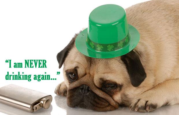 st-patricks-day-pug-hangover.jpg