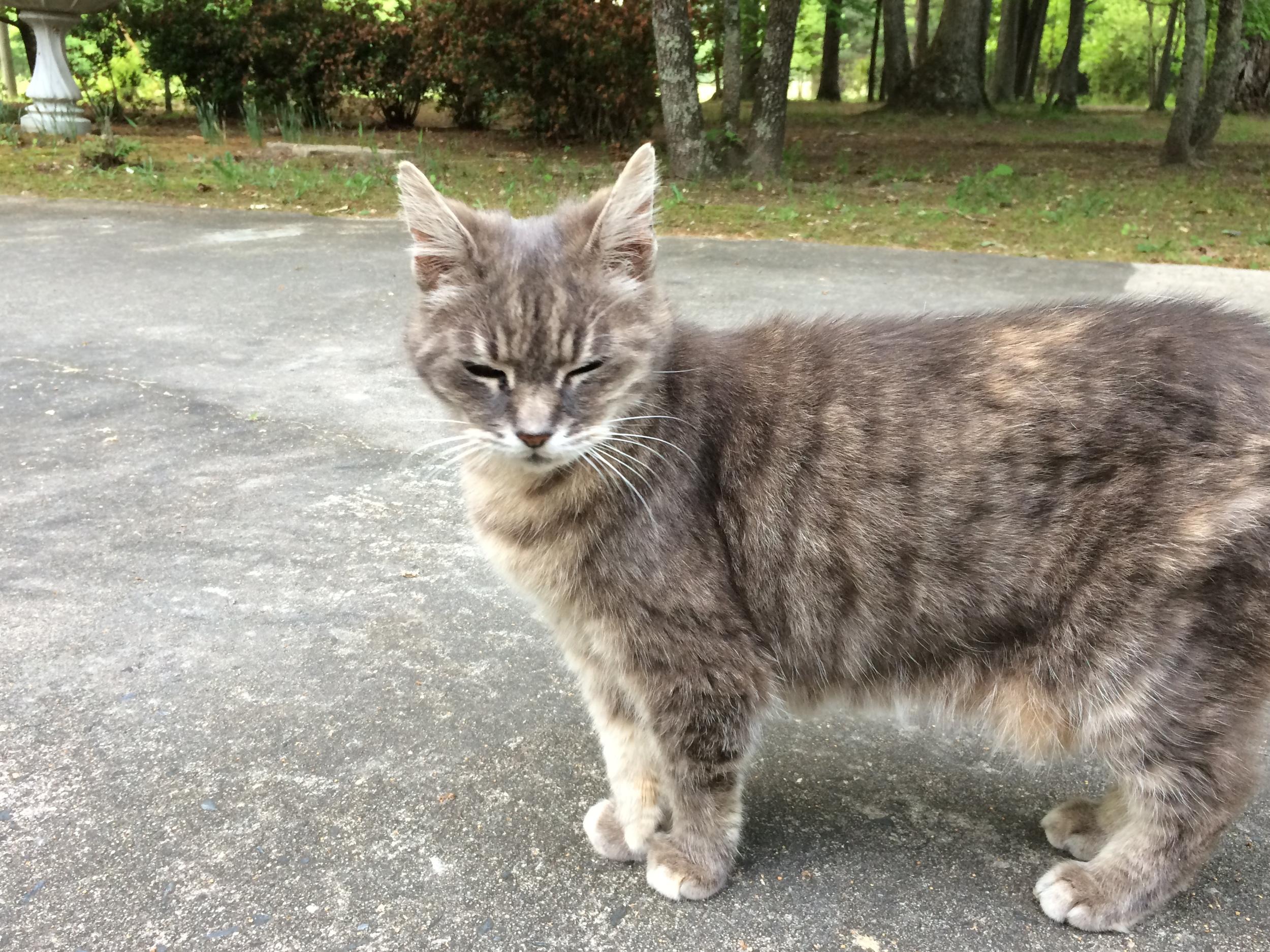 Mom's kitty, Smokey