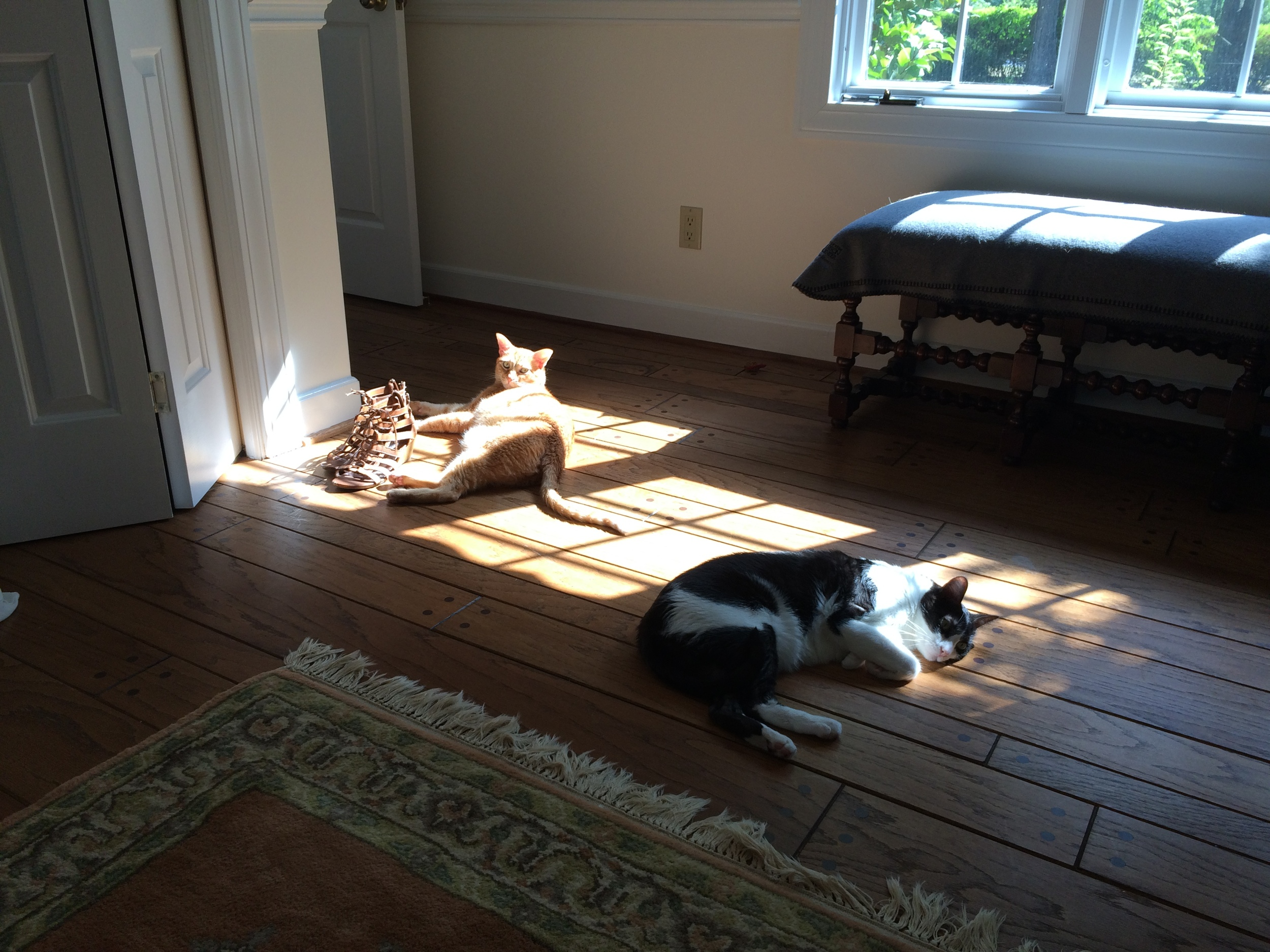 My boys find some sun….
