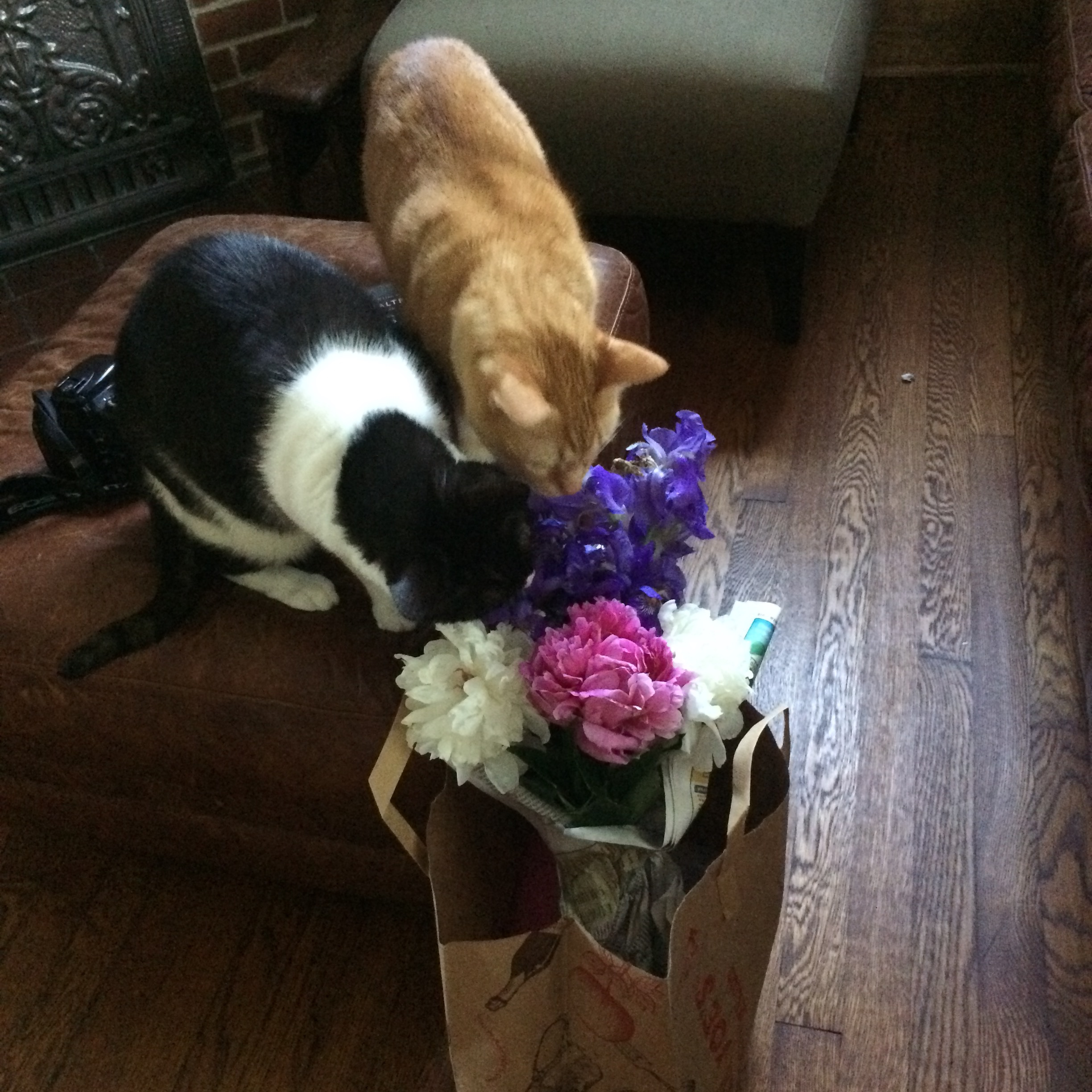 The boys checking out the bouquet I made from my yard for my Mom on Mother's Day....kitty approved!