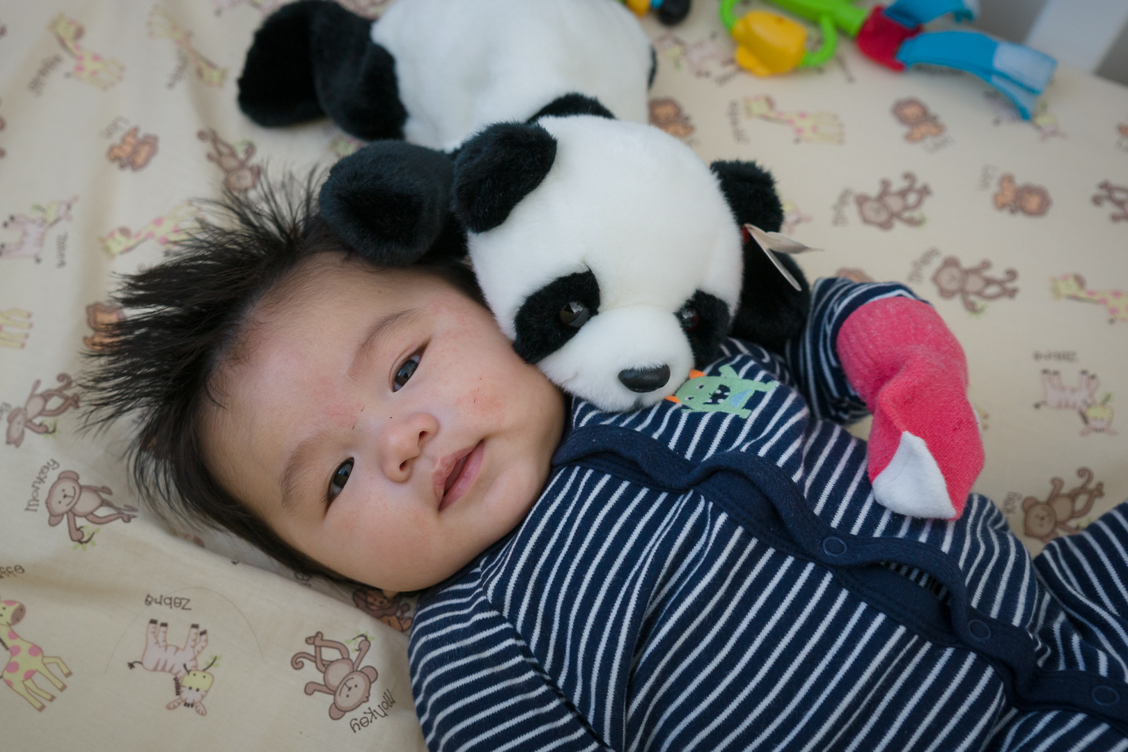 Phil when he was a bit older than three months. He loves pandas!