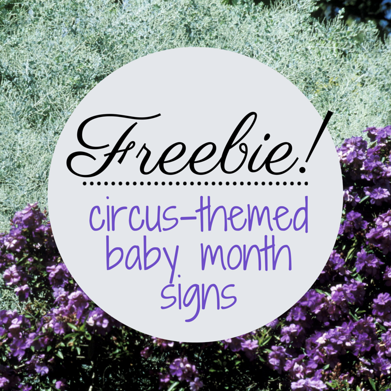 graphic regarding Printable Baby Month Signs titled Babys To start with 12 months: Totally free Printable (Circus-Themed) Little one Thirty day period