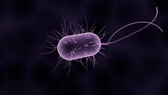 Bacteria, a microscopic bug