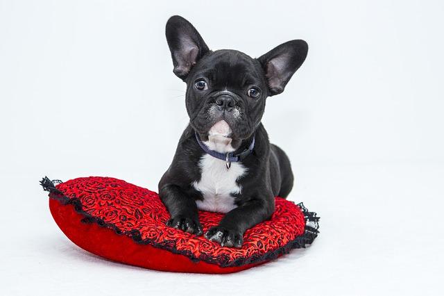 bulldog-1047518_640.jpg